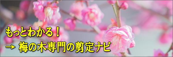 梅の木の剪定専門サイト