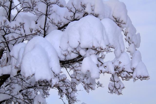 2.16-1大雪
