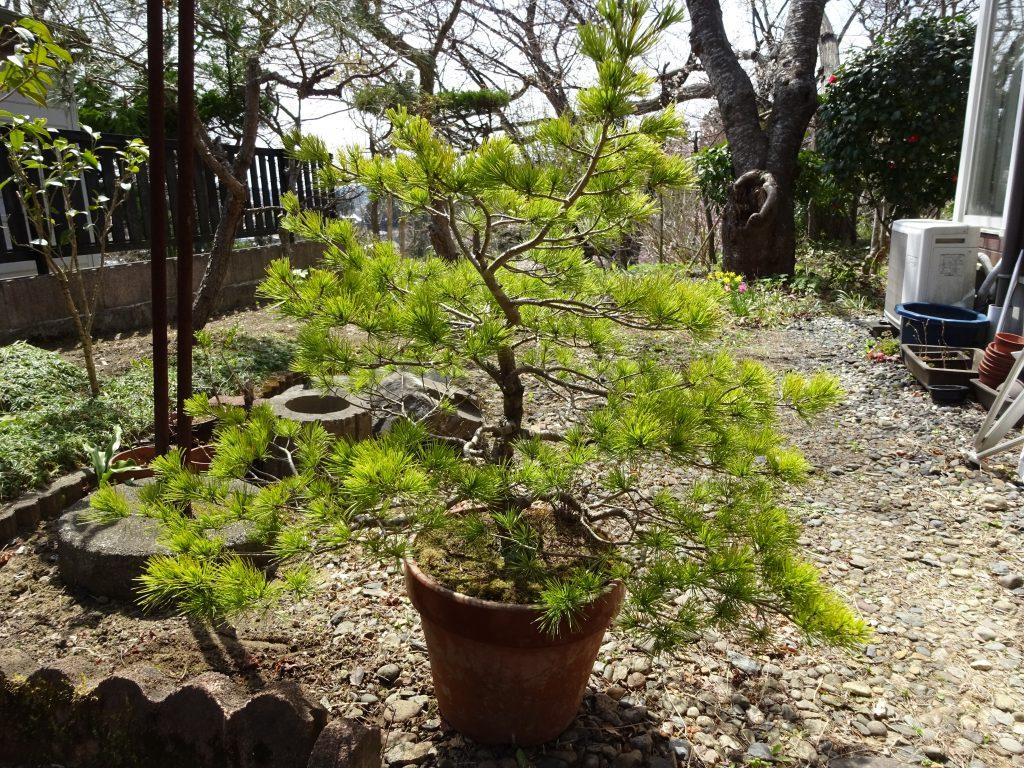 盆栽と鉢植え